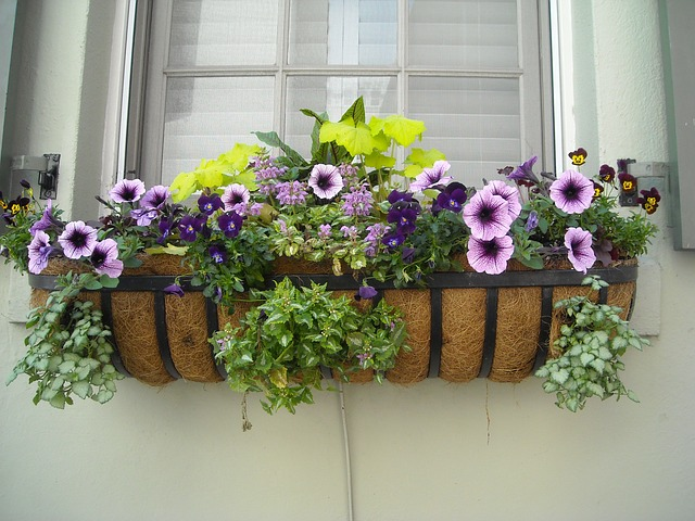 květiny u okna.jpg