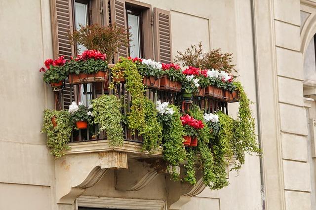 květiny na balkoně.jpg