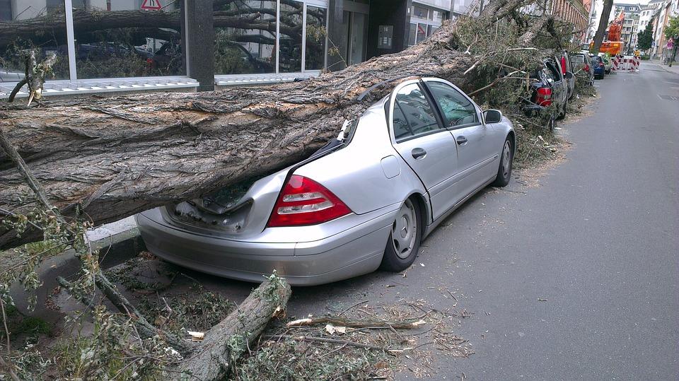 strom na autě
